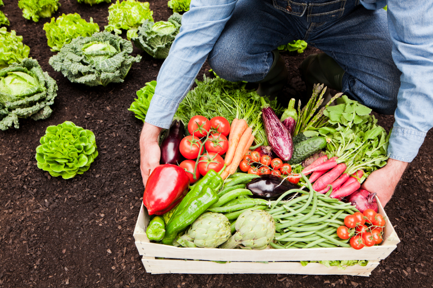 how to make your own vegetable garden