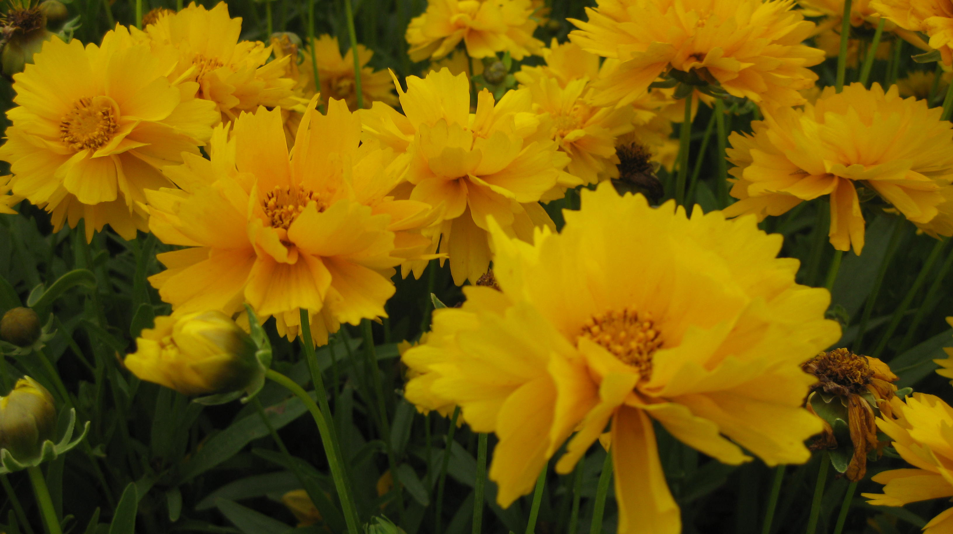 5 Full Sun Perennials For Summer