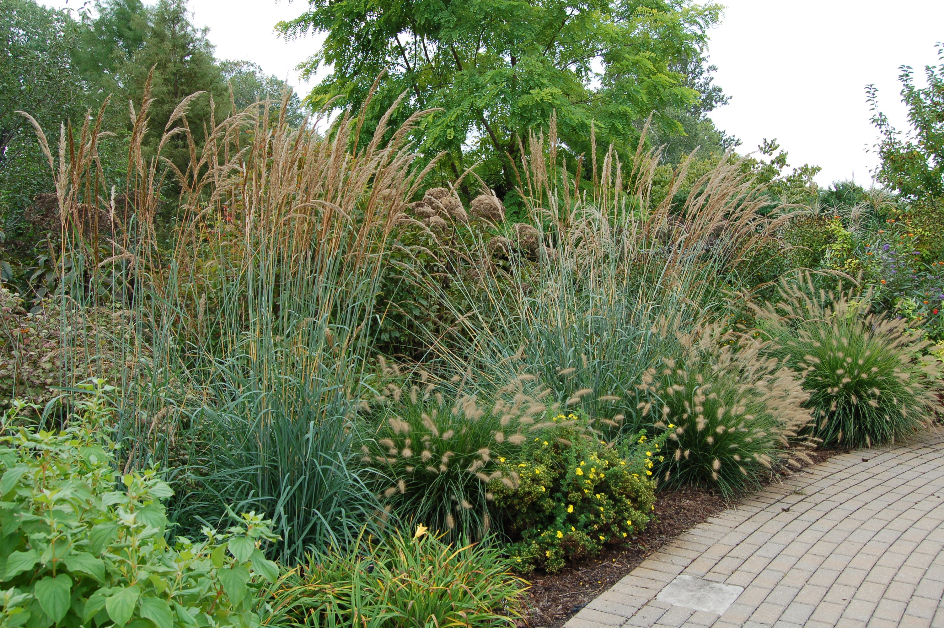 Landscaping with ornamental grasses for Tall grass garden