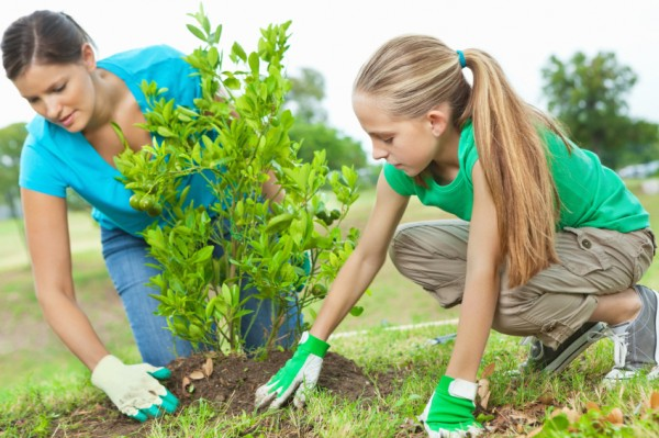 landscaping-planting-tree